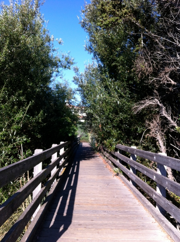 Bridge on the running trail